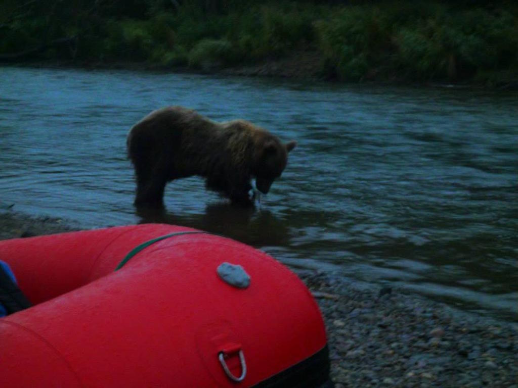 13' Saturn Whitewater Raft and a Grizzly!