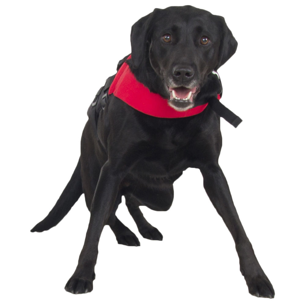 Accessories Parts Life Jackets Nrs Cfd Dog Life